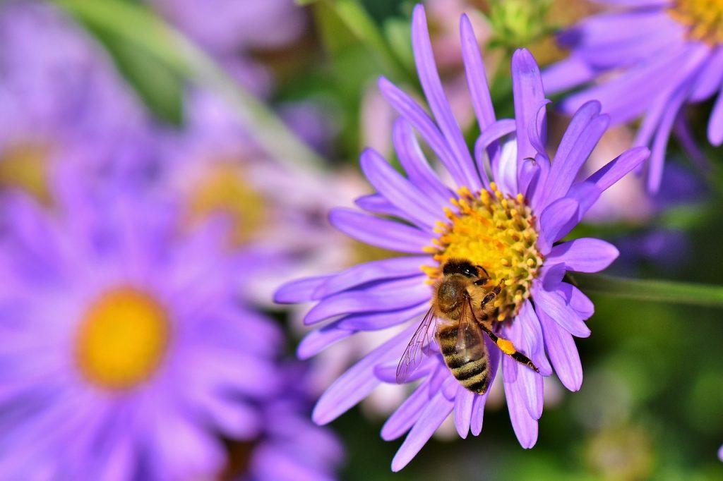 abeja flor para quién está recomendado el polen