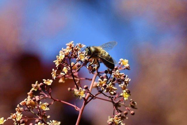 Diferencias entre la miel de primavera y la miel de otoño