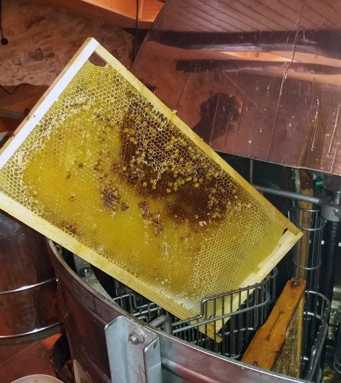 panales vías de miel que vuelve a las colmenas
